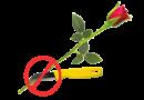 Floralife® Express Clear: never cut a stem again