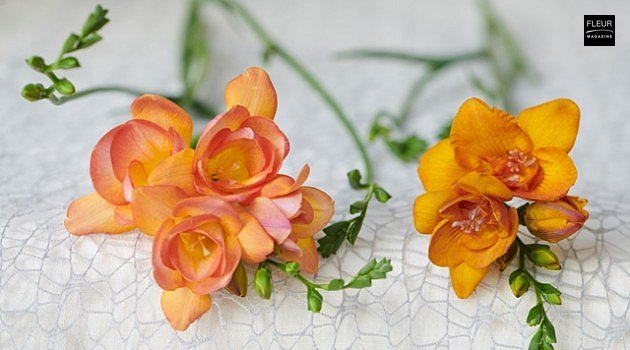 Freesia: delicious scent in your bouquet