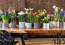 Springtime bulbs : do you have them all ?