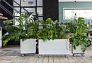 The story of the Monstera.Inc, a kind of jungle look