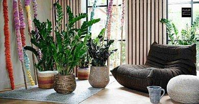 ZZ Plant: Botanical Superhero