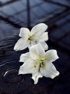 alstroemeria freesia anemone brightness home decoration flowers white winter interior design flower arranging florist inspiration ideas tulips lily Fleur Creatif