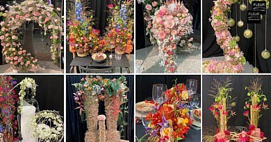 The Most Beautiful Creations of the Belgian Flower Arranging Championship