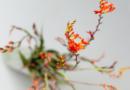 8 Classic Autumn Flowers