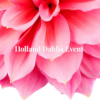 Holland Dahlia event the Netherlands flowers lovers floral art inspiration tips & tricks visit calender to do agenda