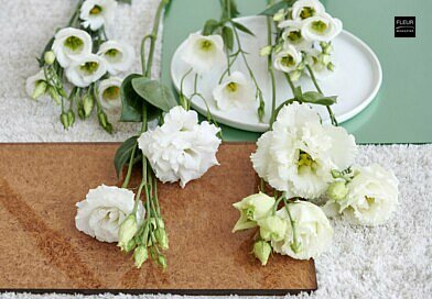 fleur creatif magazine floral art floral design flower arrangements florist florsitry designs flower inspiration winter flowers amaryllis anemone tulip lilac cymbidium orchid lisianthus mimosa infos flower lovers international magazine made in belgium