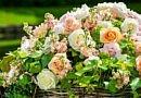Garden basket full of radiant roses