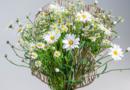 Sparkling spring with marguerites