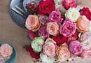 The most beautiful roses