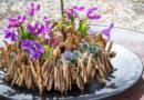 Trendy Summer DIY with Clematis